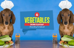 Top 6 Vegetables Dogs Can Eat According to Science