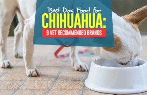 Top Best Dog Foods for Chihuahua
