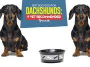 Top Best Dog Foods for Dachshunds