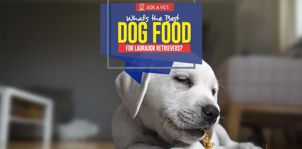 Top Best Dog Foods for Labrador Retrievers