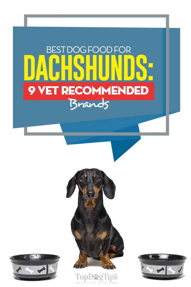 Vet Recommended Dog Food for Dachshunds
