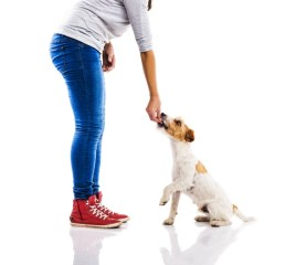 Causes of Heartworm in Dogs