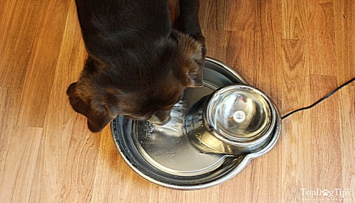 Using a Dog Water Fountain in Our Household