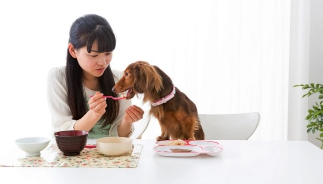 Some human foods are easier for dogs to digest