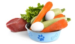 Reasons to Feed Human Food to Dogs