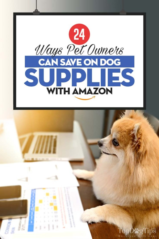 The 24 Ways Pet Owners Can Save on Dog Supplies with Amazon