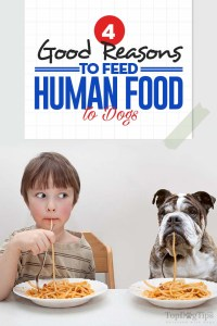 The 4 Good Reasons to Feed Human Food to Dogs