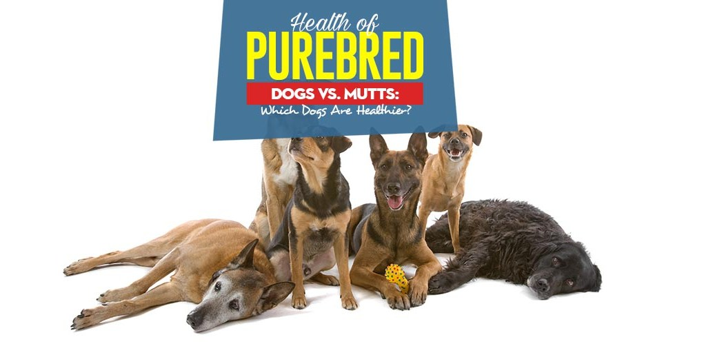 The Guide on Health of Purebred Dogs vs Mutts