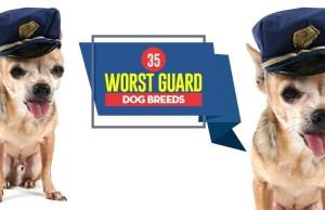 Top 35 Worst Guard Dog Breeds