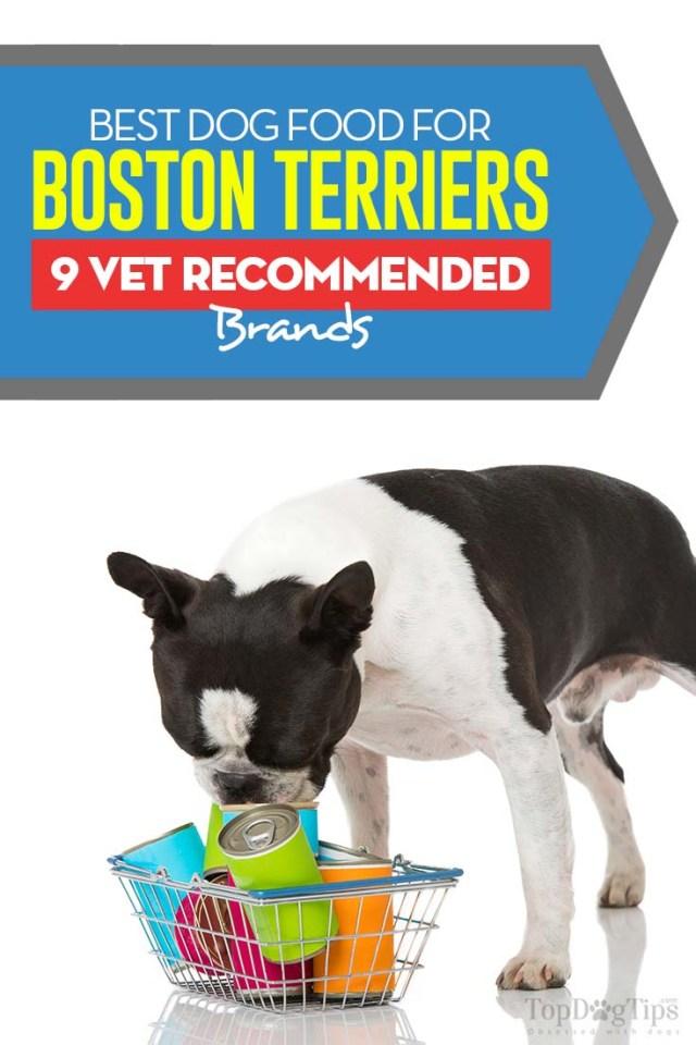 Topbewertetes Bestes Hundefutter für Boston Terrier