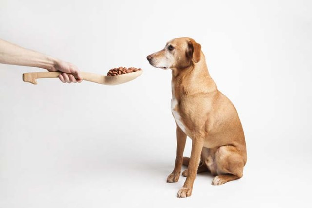 Why Human Food for Dogs is Better