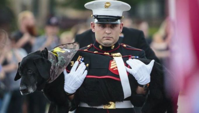 Emotional Farewell Ceremony Held for Marine Dog