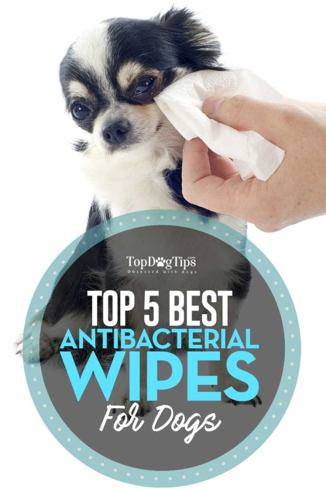 5 Top Rated Best Antiseptic Wipes for Dogs to Treat Fungal Bacterial Infections