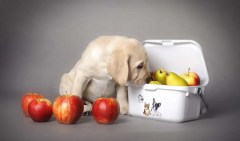 9 Superfoods for Dogs They Should Eat According to Science