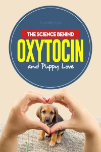 All The Science Behind Oxytocin and Puppy Love