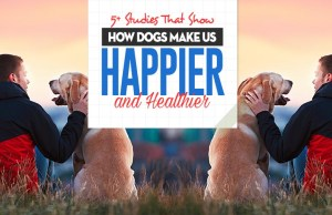 All the Studies That Show How Dogs Make Us Happier and Healthier