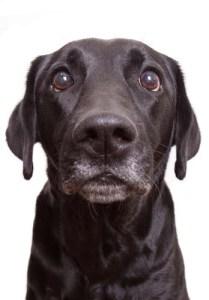 Dog Dominance Science
