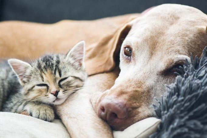 Dog Owners vs Cat Owners - Study Reveals Who's Willing to Spend More to Save Their Pet's Life