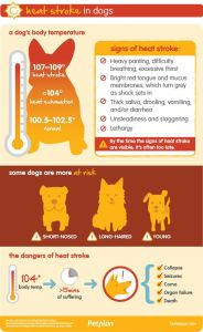 Dog body temperature