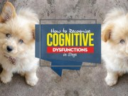 How Do You Recognize Cognitive Dysfunctions in Dogs and What You Can Do to Help Them