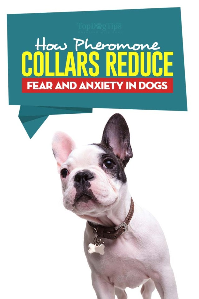 How Dog Pheromone Collars Reduce Fear and Anxiety