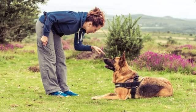 How to Use Dog Psychology Tricks to Train a Dog
