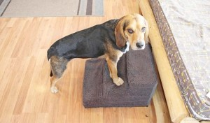 Made in USA Dog Steps Stairs