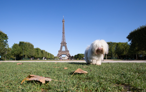 Most Dog Friendly Cities in the World