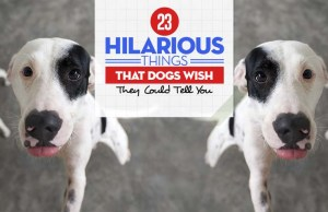 Most Hilarious Things That Dogs Wish They Could Tell You