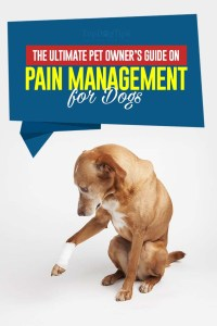 Pain Management for Dogs Guide