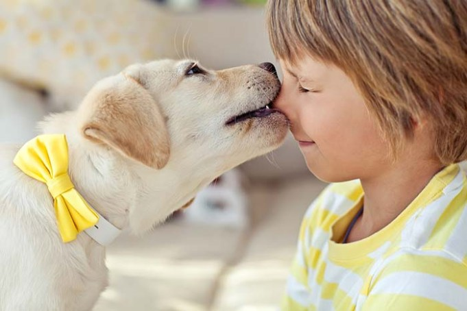 Parents Underestimate Risk of Family Dog to Children