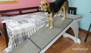 Review of PetSafe CozyUp Bed Ramp for Dogs