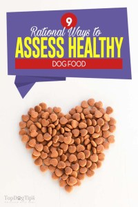 The 9 Rational Ways to Assess Healthy Dog Food