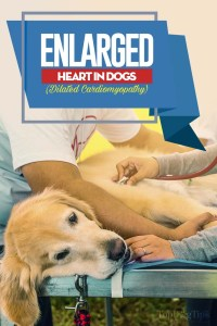 The Enlarged Heart in Dogs Guide