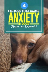 The Factors That Cause Anxiety in Dogs