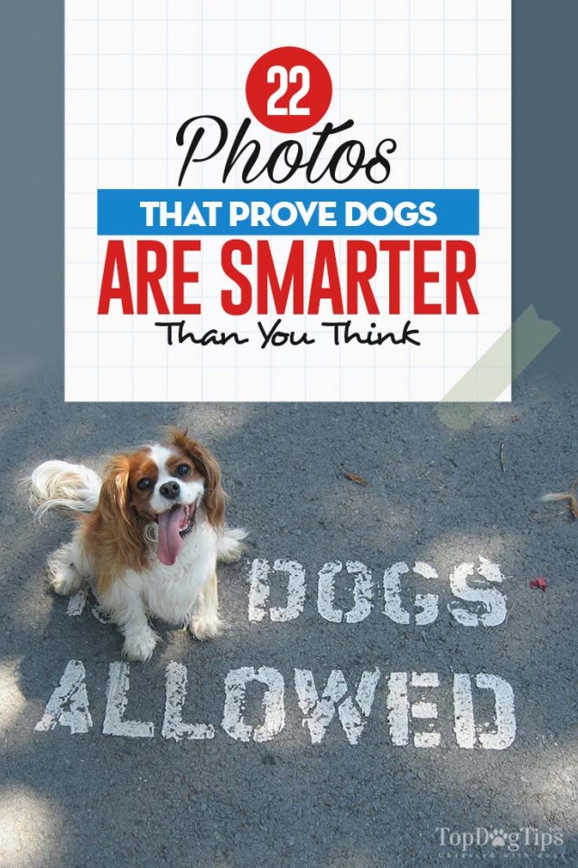 The Photos That Prove Dogs Are Smarter Than You Think