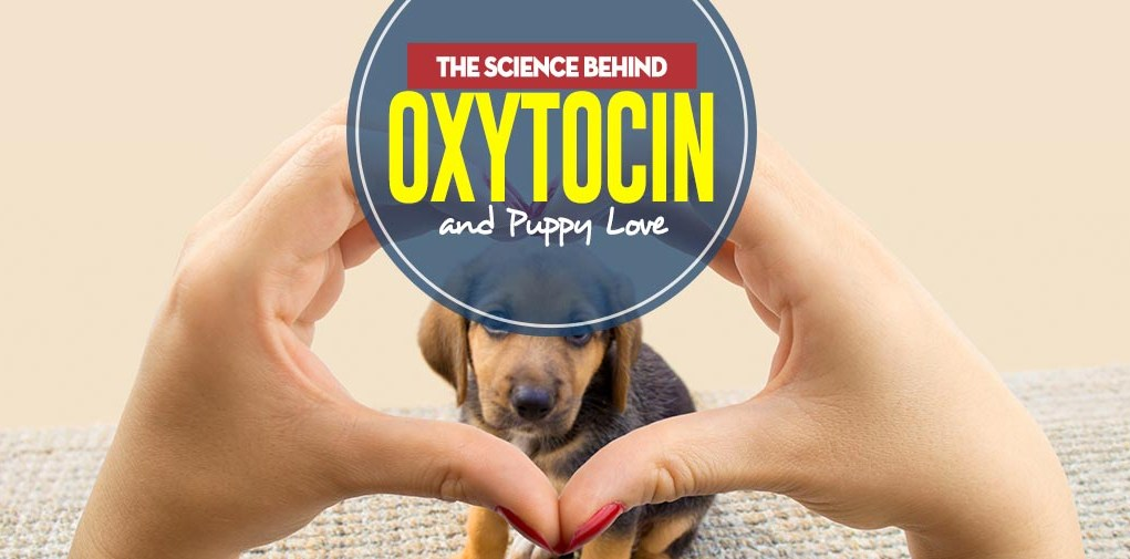 The Real Science Behind Oxytocin and Puppy Love