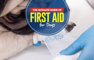 The Ultimate Pet Owners Guide of First Aid for Dogs