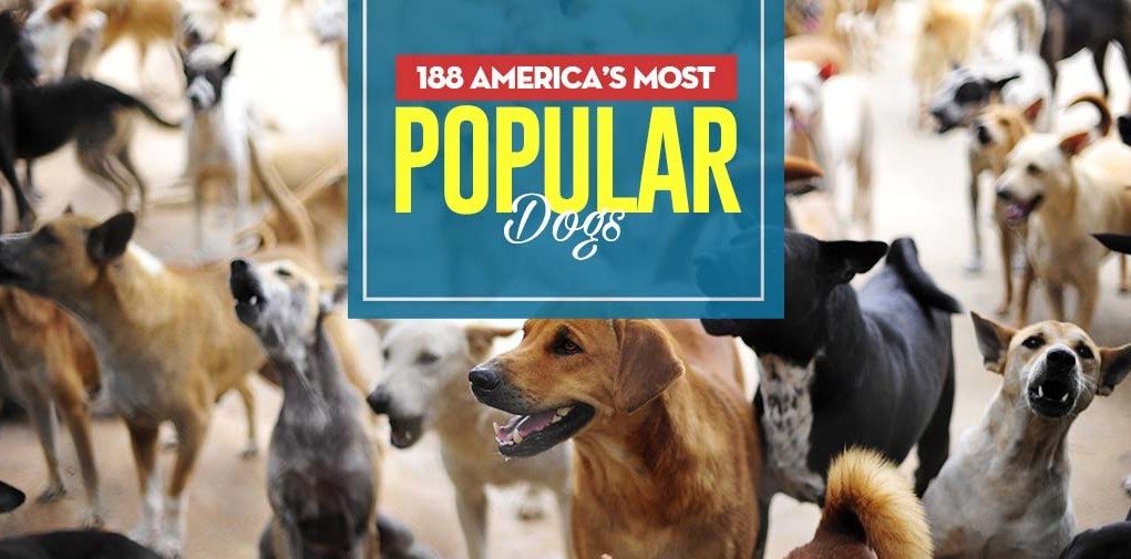 Top 188 America's Most Popular Dogs