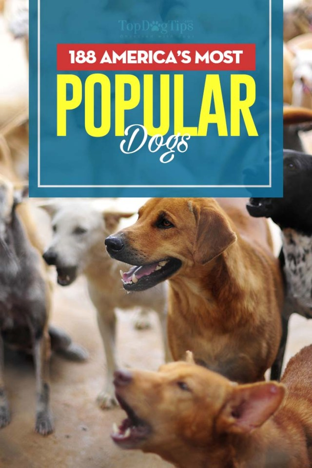 Top 200 Most Popular Dogs in USA
