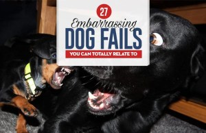 Top 27 Embarrassing Dog Fails You Can Totally Relate To