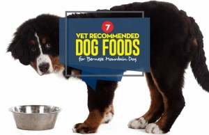 Top Best Dog Food for Bernese Mountain Dog