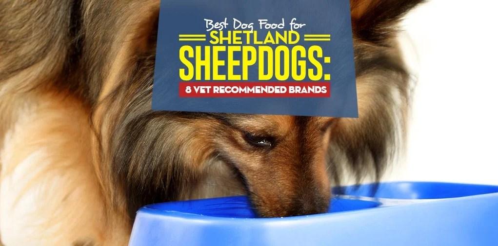 Top Best Dog Food for Shetland Sheepdogs