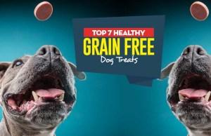 Top Best Grain Free Dog Treats
