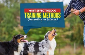 Top Most Effective Dog Training Methods According to Science