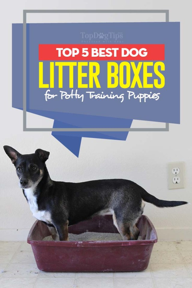 Top Rated Dog Litter Boxes for Potty Training