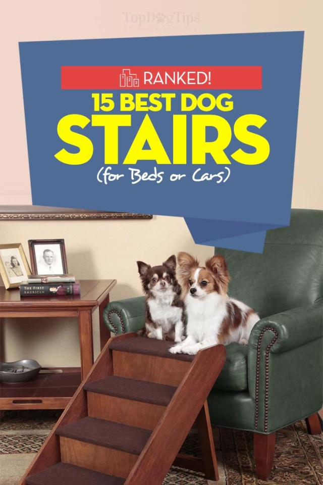 Top Rated Dog Stairs 2020