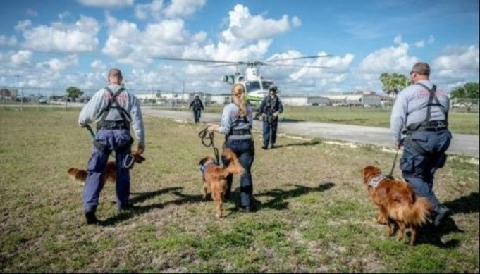 Stress Doesn't Change Performance of Search and Rescue Dogs