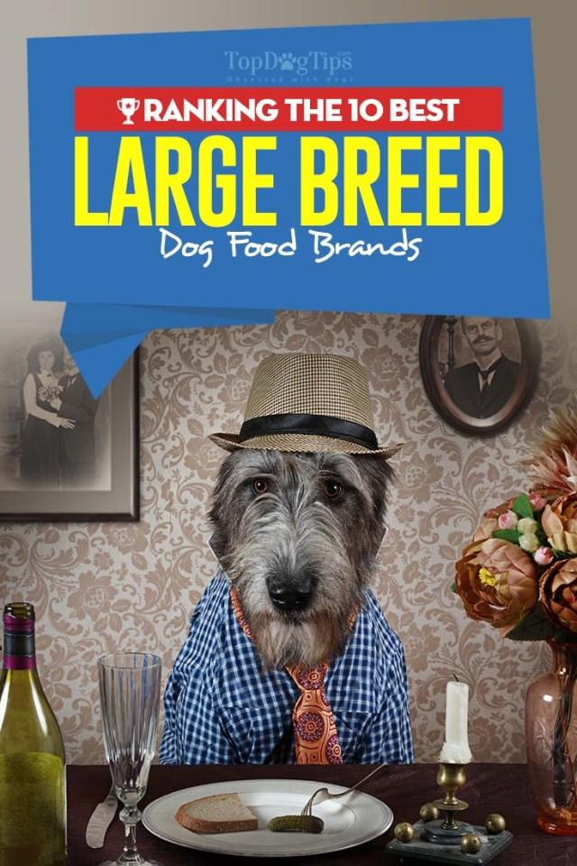10 Best Dog Foods for Large Breeds