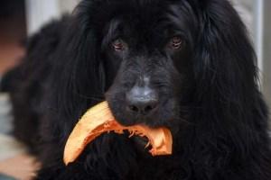 ¿Son malas las semillas de calabaza para los perros?